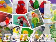 Питомник – разведения птиц. Продажа попугаев,  канареек.