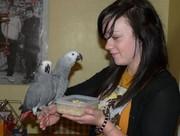 Африканский серый попугай с новой клеткой