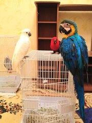 Продажа крупных пород попугаев на заказ