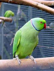 Предоставлю различную птицу с Крыма