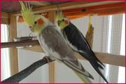 Прямые поставки в зоомагазины оптом экзотических птиц и попугаев Крыма